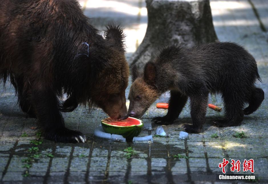 动物吃冰镇水果解暑