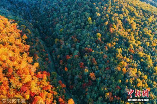 近日,吉林省长白山林区,老白山风景区茂密秋季森林林海,五彩山林