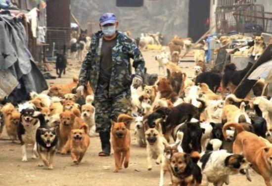 """""""""""狮子""""介绍说,在泰山小动物保护中心基地,目前已经收养了将近1000只"""