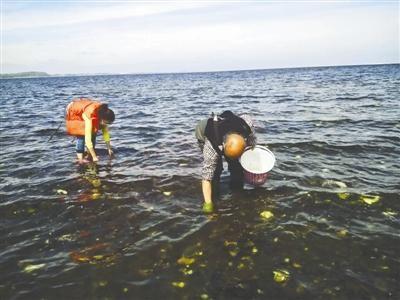 边苗苗(左)和家人在丹麦海边挖生蚝