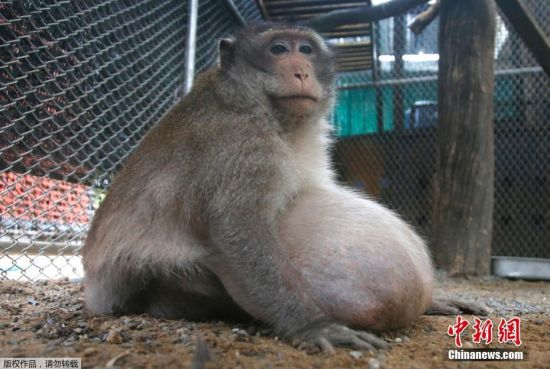野生动物管理局在曼谷的一个市场里抓到了它