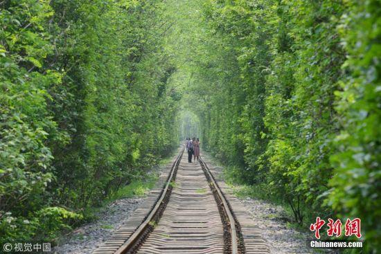 南京爱情隧道绿意再现 游客络绎不绝一睹芳容