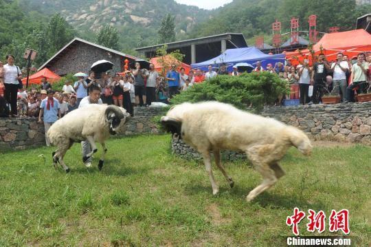 山东沂源借力伏羊文化节树立品牌 助推乡村旅游发展