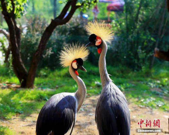 """七夕将至 动物情侣们组团""""秀恩爱"""""""