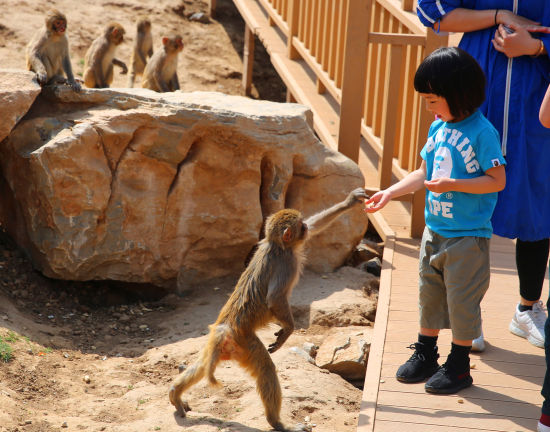 """国庆期间,济南野生动物世界景区将开展""""动物明星抖音挑战赛""""活动,还有"""