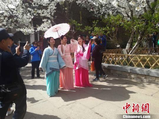 济南五龙潭樱花节开幕 游客樱花树下欣赏汉服秀表演