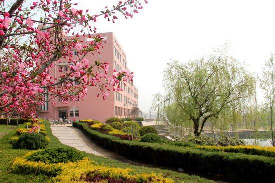 462号 山东水利职业学院尹成 《春色海棠》